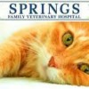 SPRINGS FAMILY VETERINARY HOSPITAL- cat