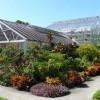 Foster Botanical Garden- green house 1