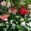 Foster Botanical Garden-flower