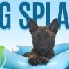 Dog Splash Event in Colorado, Colorado Springs