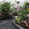 Foster Botanical Garden-orchids