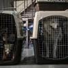 Shipping Pets- NSA Saratoga Springs-cage