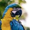 Veterinary Treatment Facility- NB Kitsap- Bremerton-birds