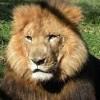 Visit the Wild Animal Safari at Pine Mountain Georgia