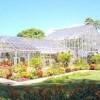 Foster Botanical Garden- green house