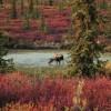 Denali National Park and Preserve in Alaska
