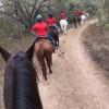 FSH-Equestrian2