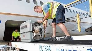Shipping Pets- NSA Saratoga Springs- airplane