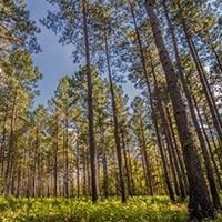 Oak Grove Campground - MCAS Cherry Point