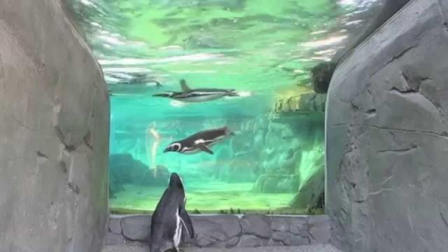 The Penguin Aquarium
