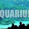 Saikai Park & 99 Islands Kujukushima Aquarium - Umi Kirara | Sasebo, Japan Vlog